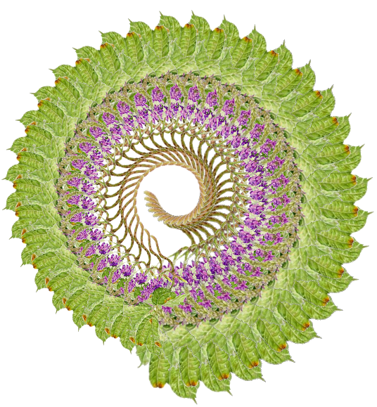 Kudzu flower manipulated with NodeBox